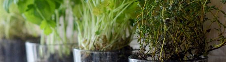 Grow Herbs   6 Ways To Bring Spring Into Your Kitchen
